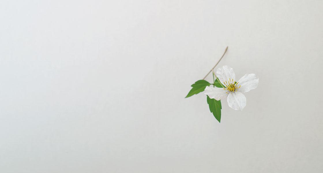 須田悦弘 ミテクレマチス